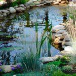 Какие растения посадить в пруду.