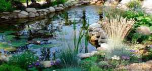 Растения для садового пруда