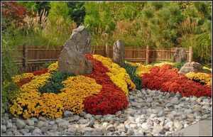 Долгоцветущие растения