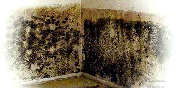грибок и плесень на стенах