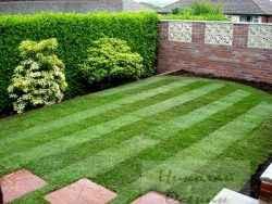 Преимущества рулоного газона