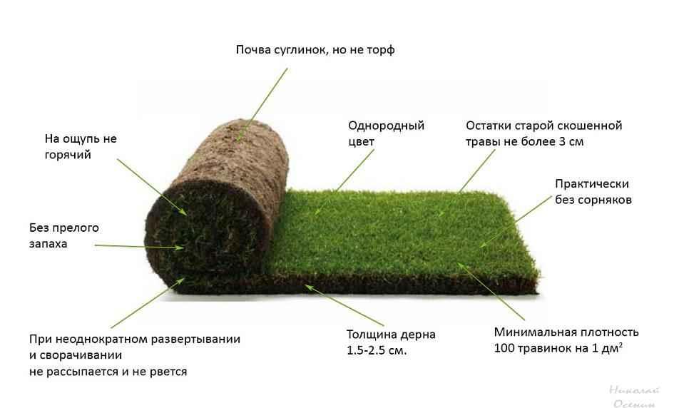 Как правильно выбрать рулонный газон
