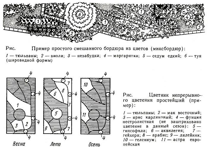 Пример простого смешанного бордюра из цветов