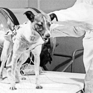 Первым героем Советского союза должна была стать собака-космонавт Лайка